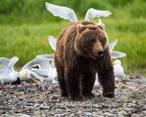 Angel Bear by Michael Dyches