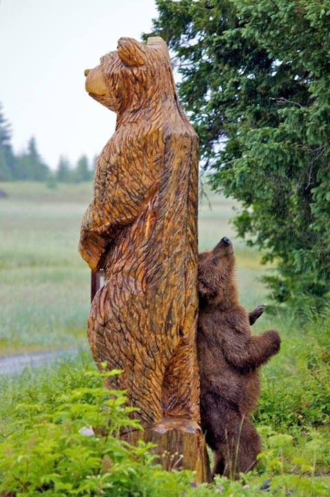 This bear in Silver Salmon Creek Is loving his wooden friend. Photo by Pam Smith