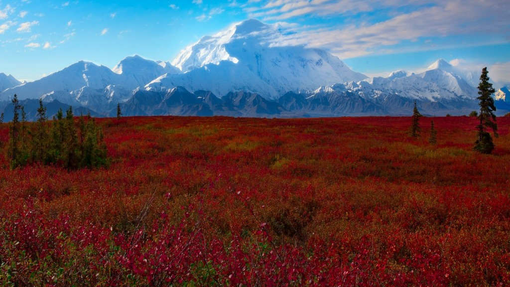 Beautiful Denali National Park In The Fall. Photo Author Unknown