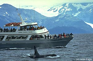 Kenai Fjords Tour (Source)