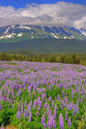 Fields Of The Best Smelling Flowers! (Photo Author Unknown)