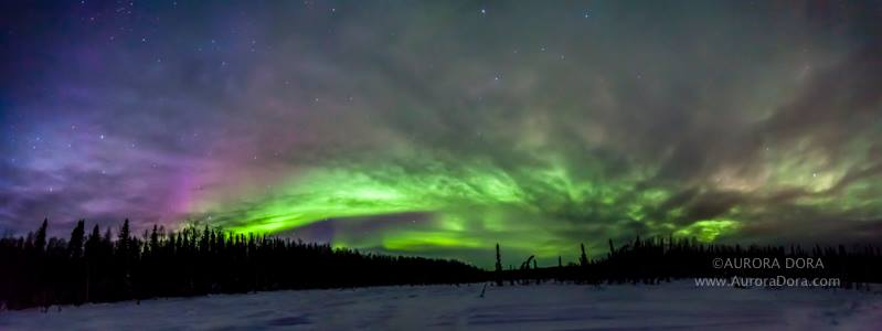 Aurora Over Willow Alaska. Photo By Aurora Dora