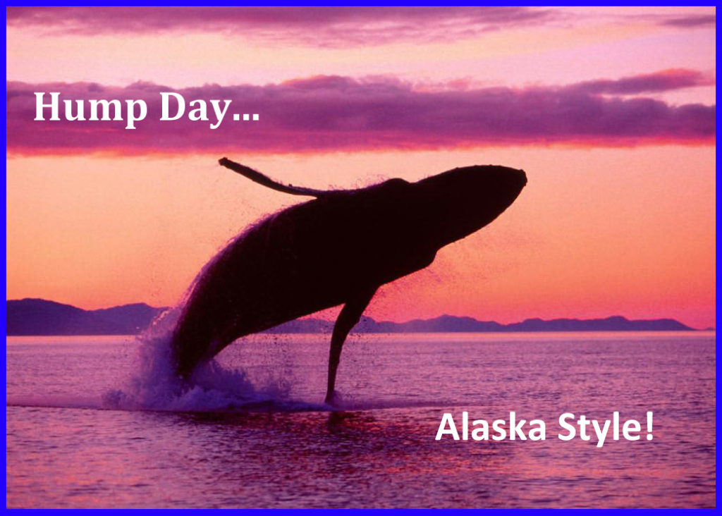 Hump Day In Alaska