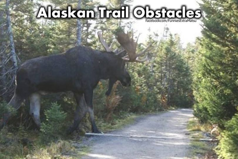 Huge Alaskan Trail Obstacle!