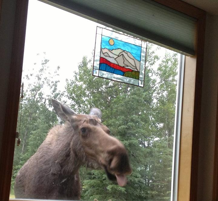 Peeping Moose. Photo By Dorothy Thrall