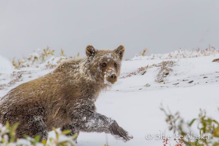 See You In The Spring! Photo By Blue Ice Alaska
