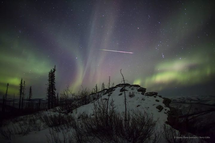 Aurora and Shooting Star. Photo By Alaska Photo Journeys. 1,131 Likes