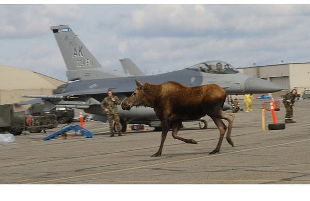 Eielson AFB. Photo Author Unknown. 1,626 Likes