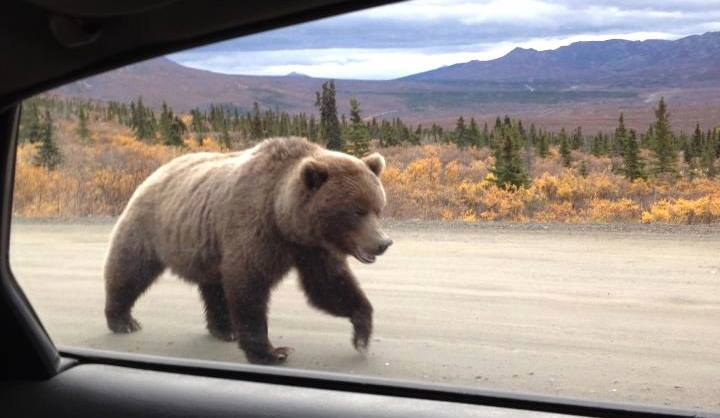 In Denali National Park By Marylou Miller. 1,600 Likes