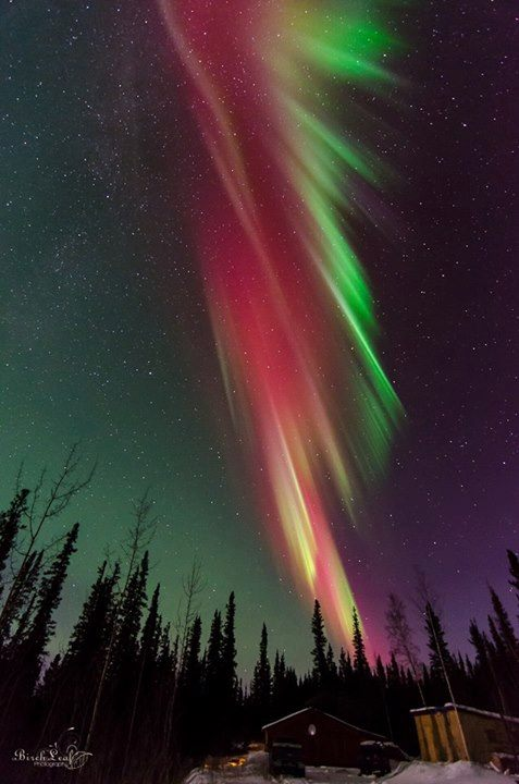 Northern Lights Over Delta Junction. Photo By Birch Leaf Photography. 1,150 Likes