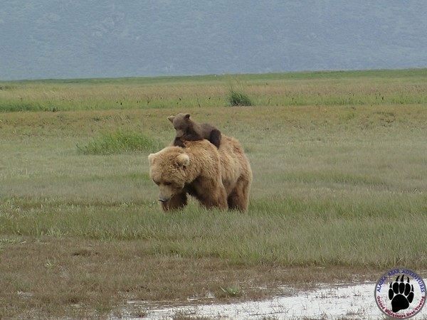 The Many Adventures And Activities Throughout Alaska Including Bear Viewing. Photo By Alaska Bear Adventures. 2,024 Likes