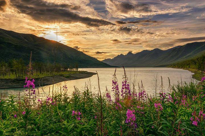 Beautiful Fireweed Counting Down Until Winter Arrives. Eklutna Lake By Jeff Ehlers. 1,357 Likes