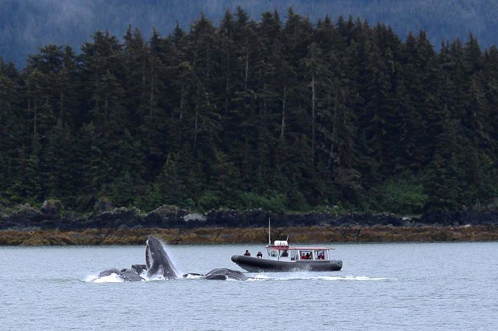Going On A Whale Watching Tour. Photo By Susan Harris. 871 Likes